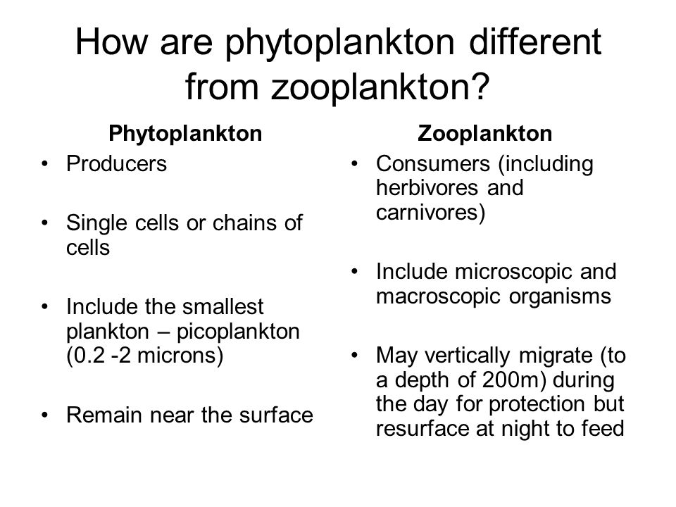 How are phytoplankton different from zooplankton