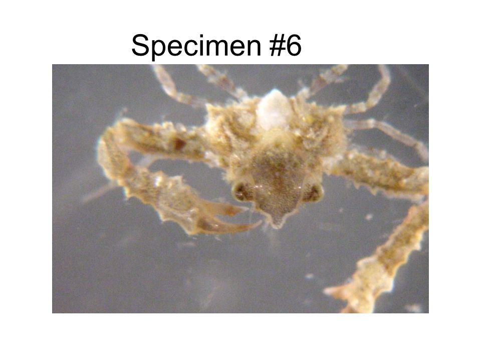 Specimen #6