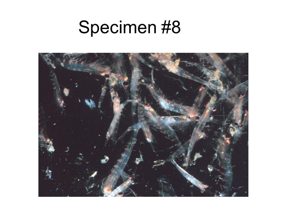Specimen #8