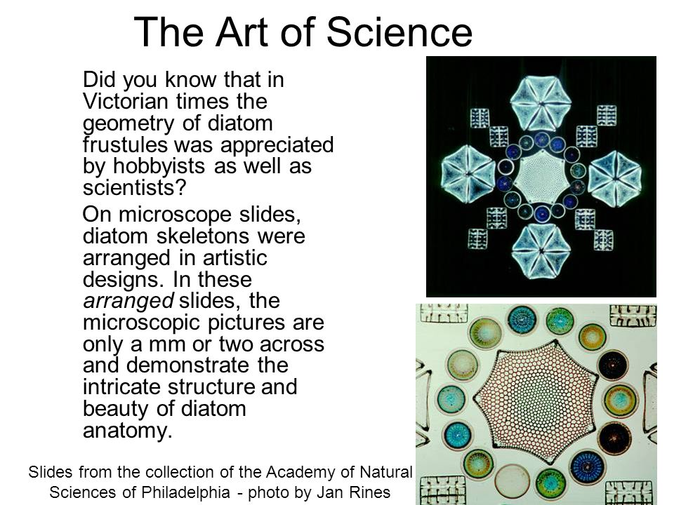 The Art of Science Did you know that in Victorian times the geometry of diatom frustules was appreciated by hobbyists as well as scientists
