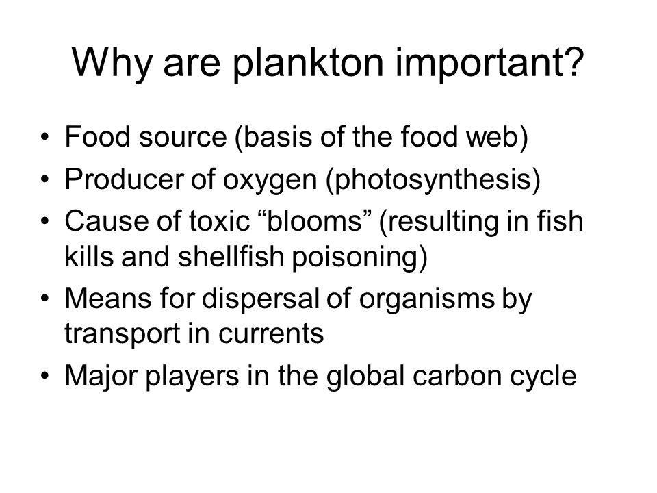 Why are plankton important