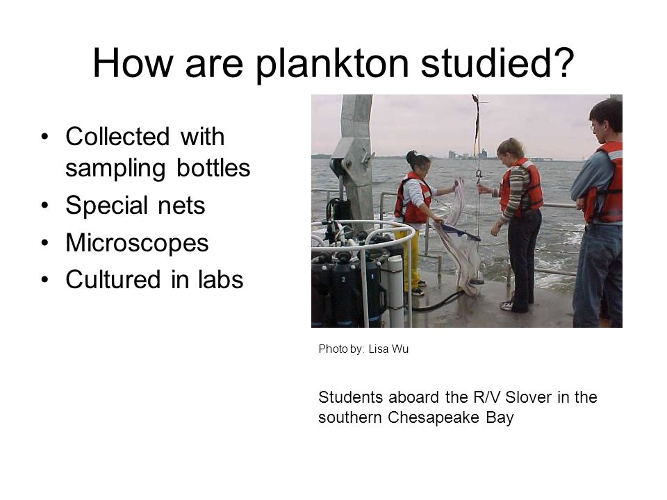 How are plankton studied
