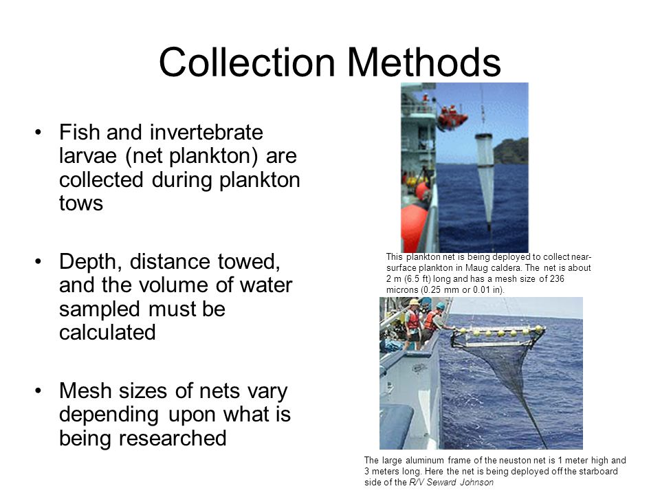 Collection Methods Fish and invertebrate larvae (net plankton) are collected during plankton tows.