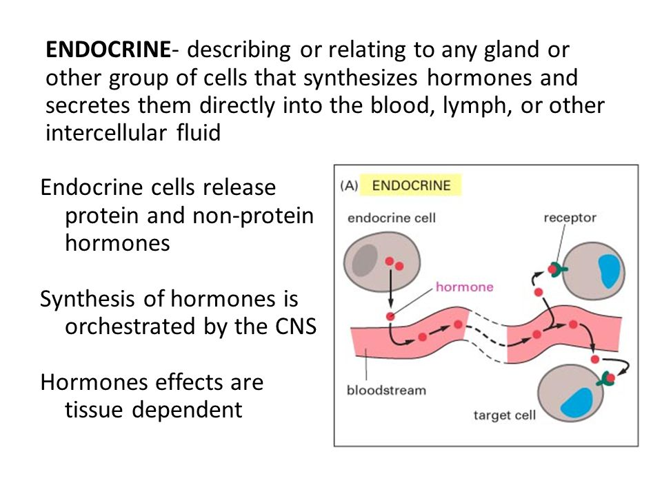 ENDOCRINE- describing or relating to any gland or other group of cells that synthesizes hormones and secretes them directly into the blood, lymph, or other intercellular fluid