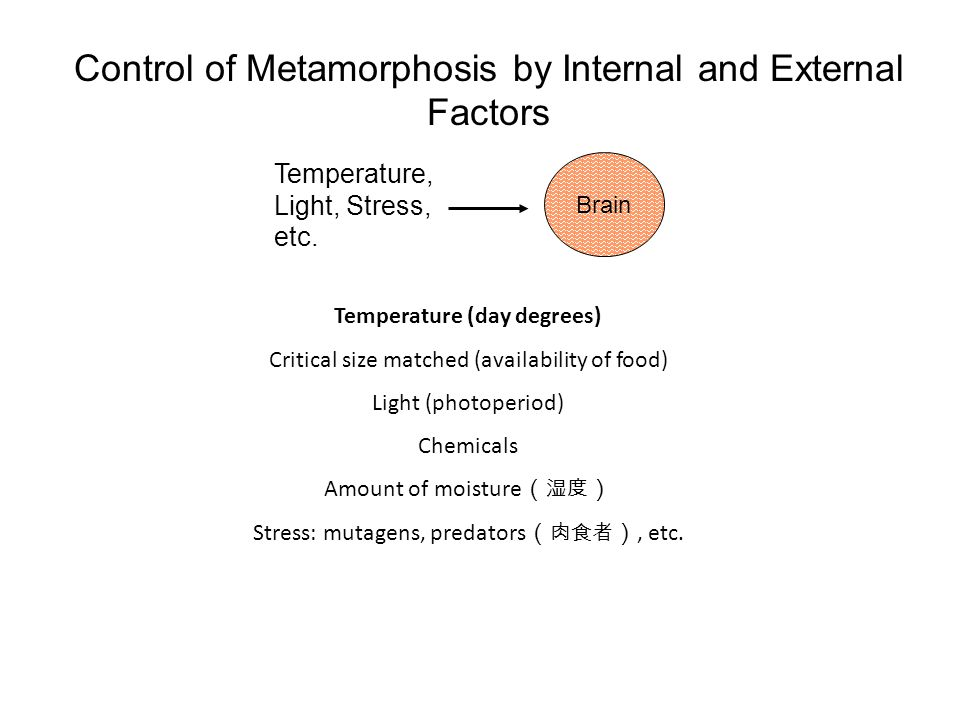 Control of Metamorphosis by Internal and External Factors