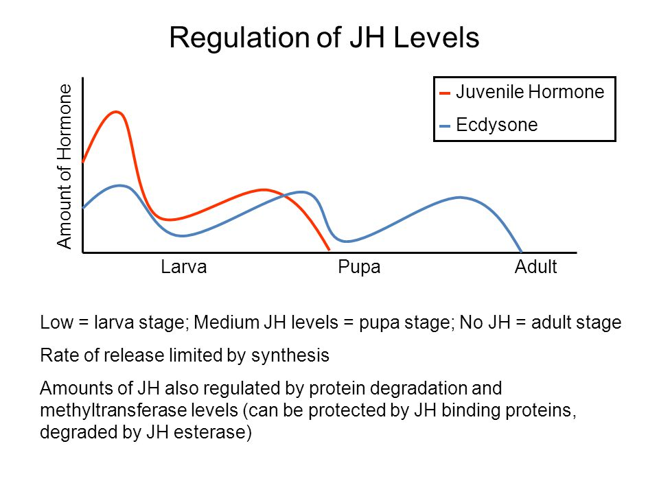 Regulation of JH Levels