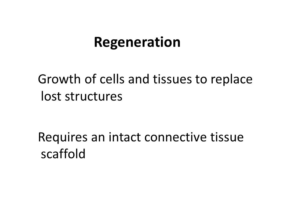Regeneration Growth of cells and tissues to replace lost structures