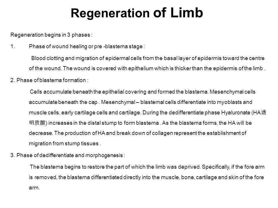Regeneration of Limb Regeneration begins in 3 phases :