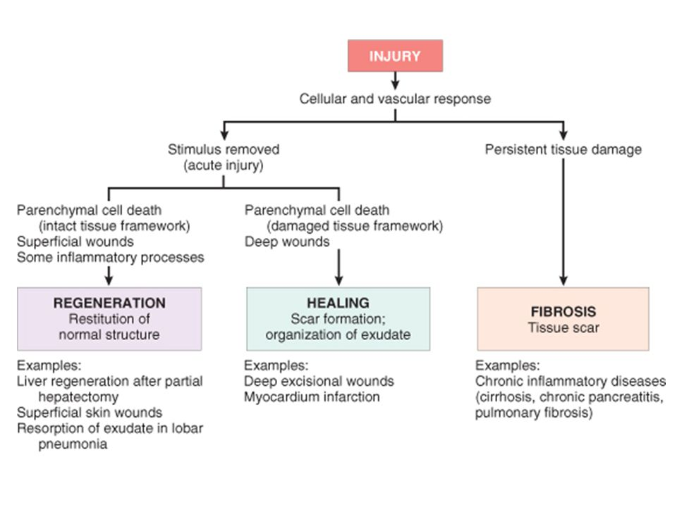 Repair responses after injury and inflammation