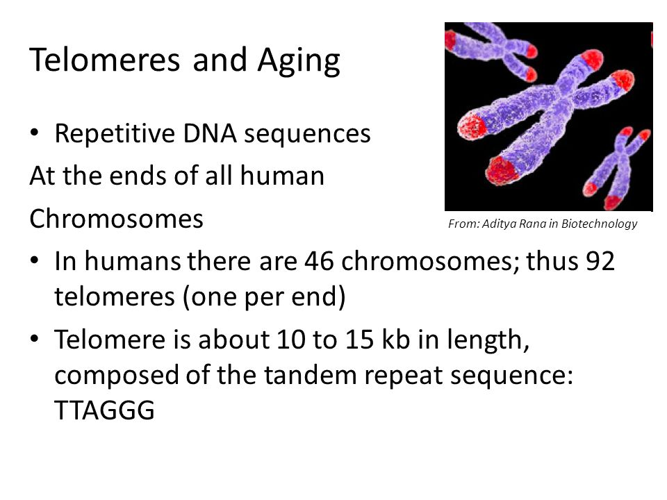 Telomeres and Aging Repetitive DNA sequences At the ends of all human