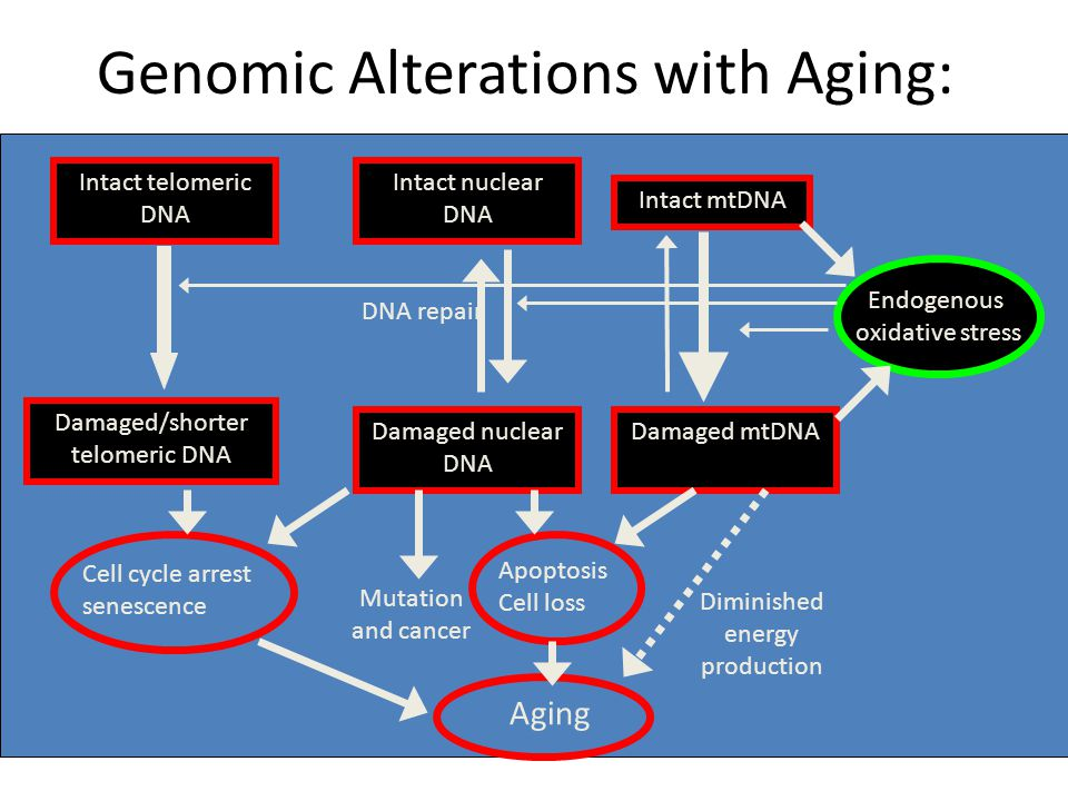 Genomic Alterations with Aging: