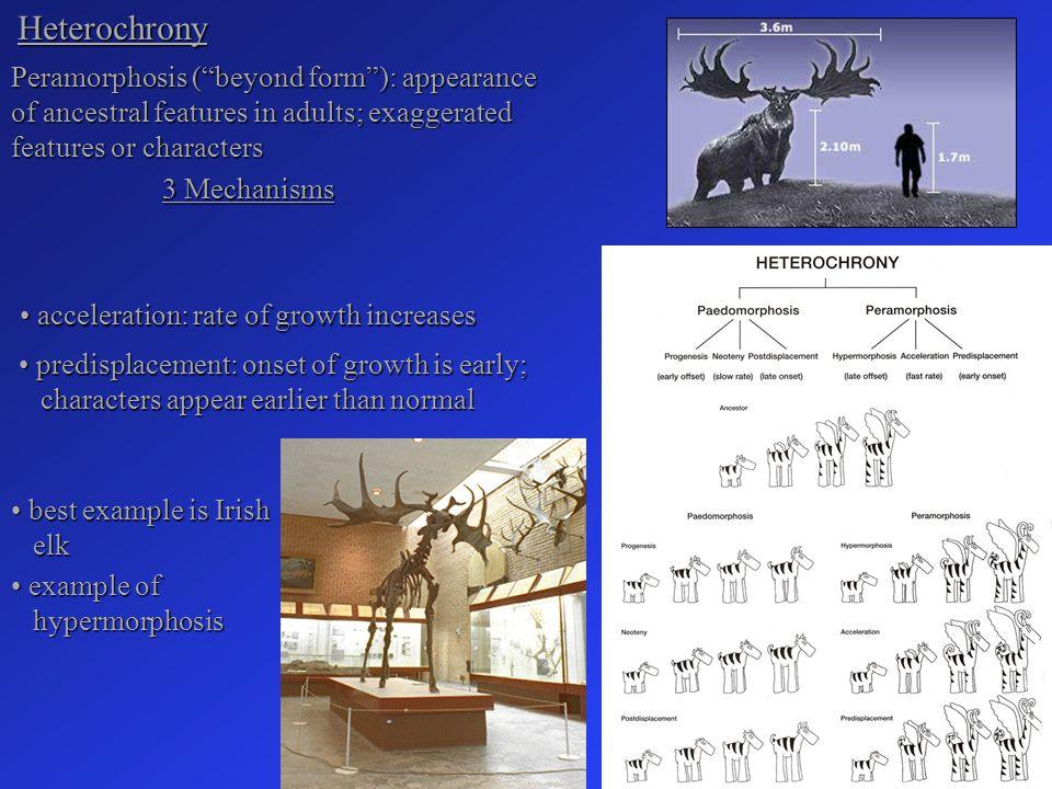 Heterochrony Peramorphosis ( beyond form ): appearance