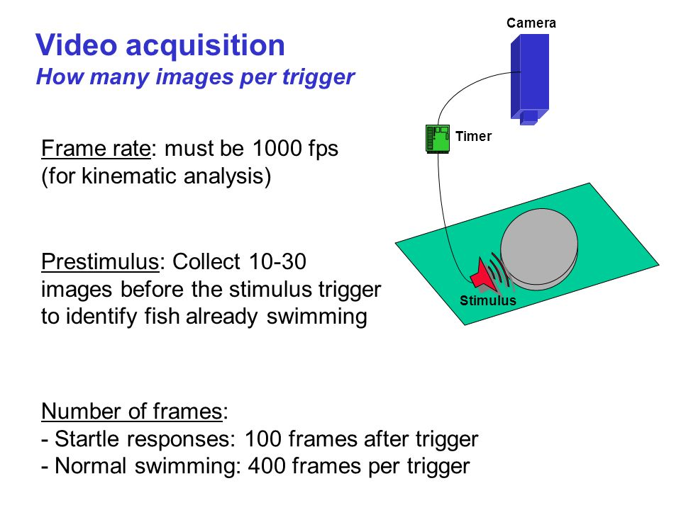Video acquisition How many images per trigger