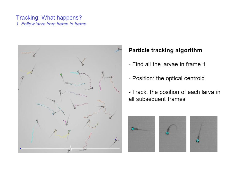 Tracking: What happens 1. Follow larva from frame to frame