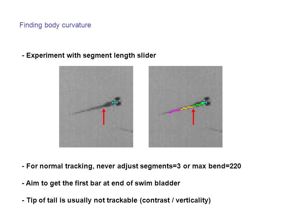 Finding body curvature