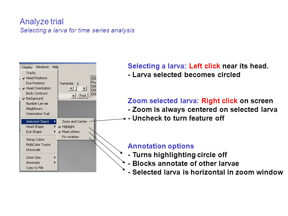 Analyze trial Selecting a larva for time series analysis