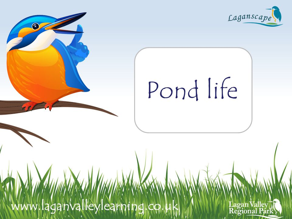 Pond life www.laganvalleylearning.co.uk