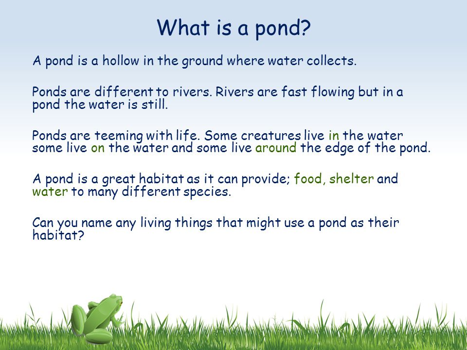What is a pond A pond is a hollow in the ground where water collects.