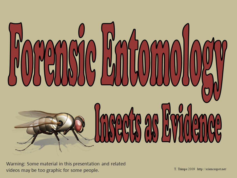 Forensic Entomology Insects As Evidence Ppt Video Online Download