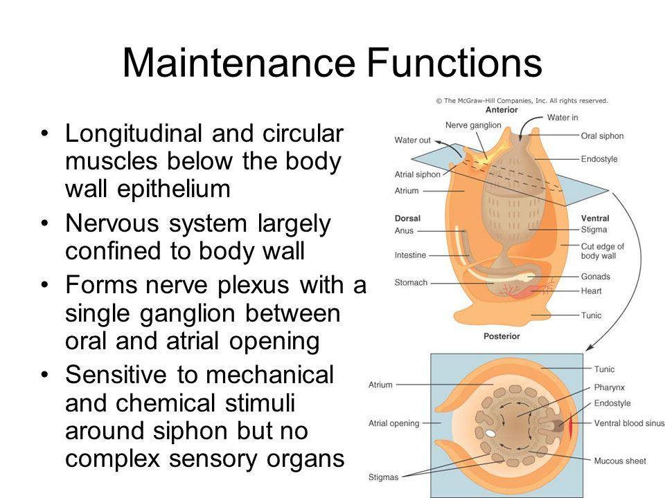 Maintenance Functions