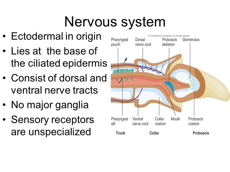 Nervous system Ectodermal in origin