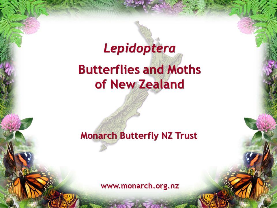 Lepidoptera Butterflies and Moths of New Zealand