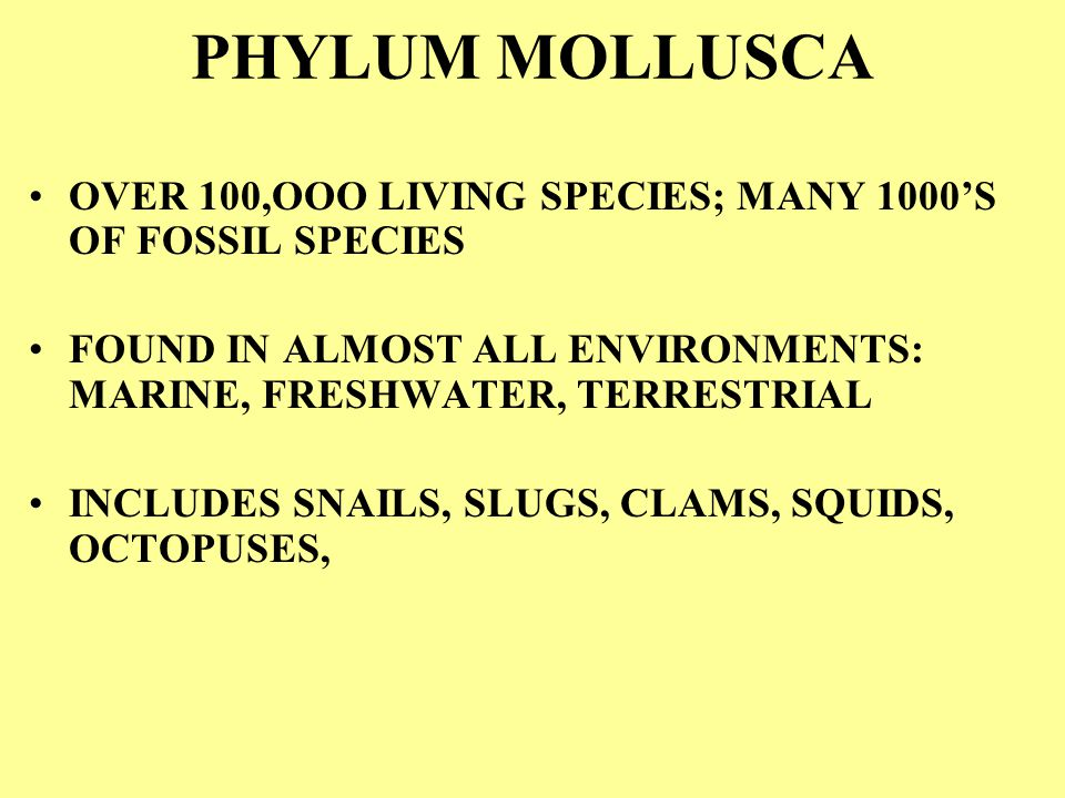 PHYLUM MOLLUSCA OVER 100,OOO LIVING SPECIES; MANY 1000'S OF FOSSIL SPECIES. FOUND IN ALMOST ALL ENVIRONMENTS: MARINE, FRESHWATER, TERRESTRIAL.