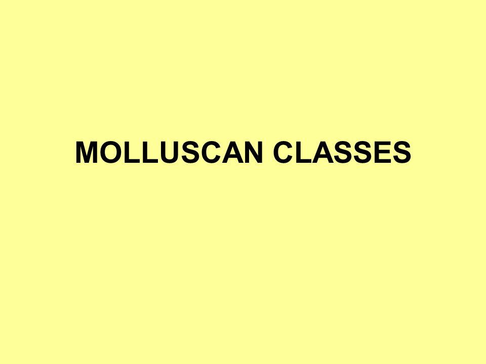 MOLLUSCAN CLASSES