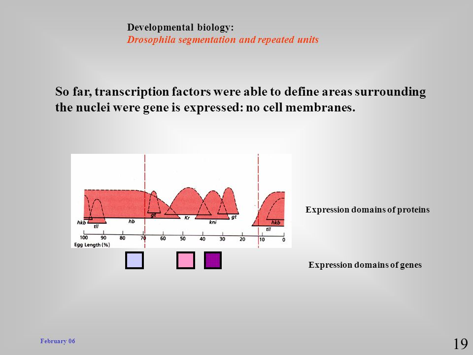 19 So far, transcription factors were able to define areas surrounding