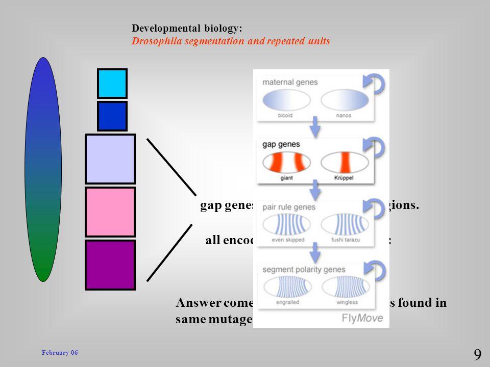 9 gap genes expressed in broad regions.