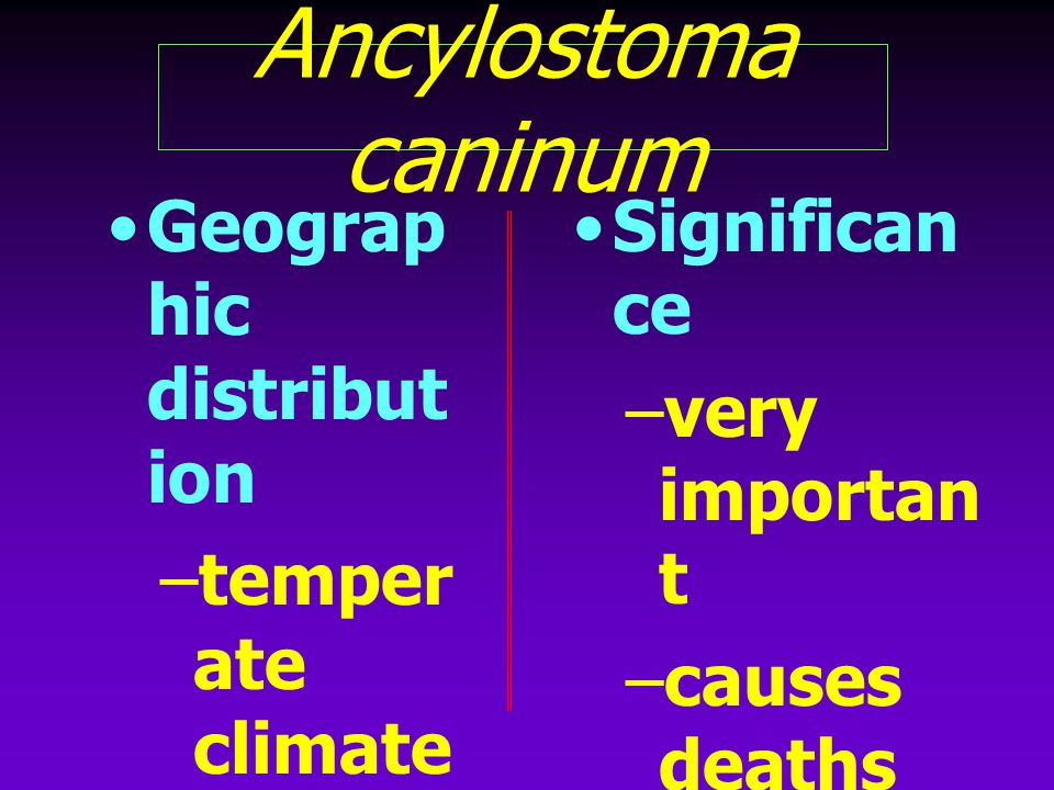 Ancylostoma caninum Geographic distribution temperate climates
