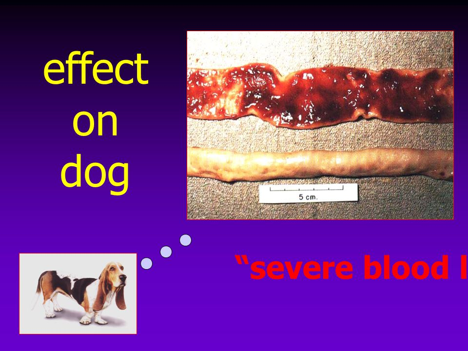 effect on dog severe blood loss