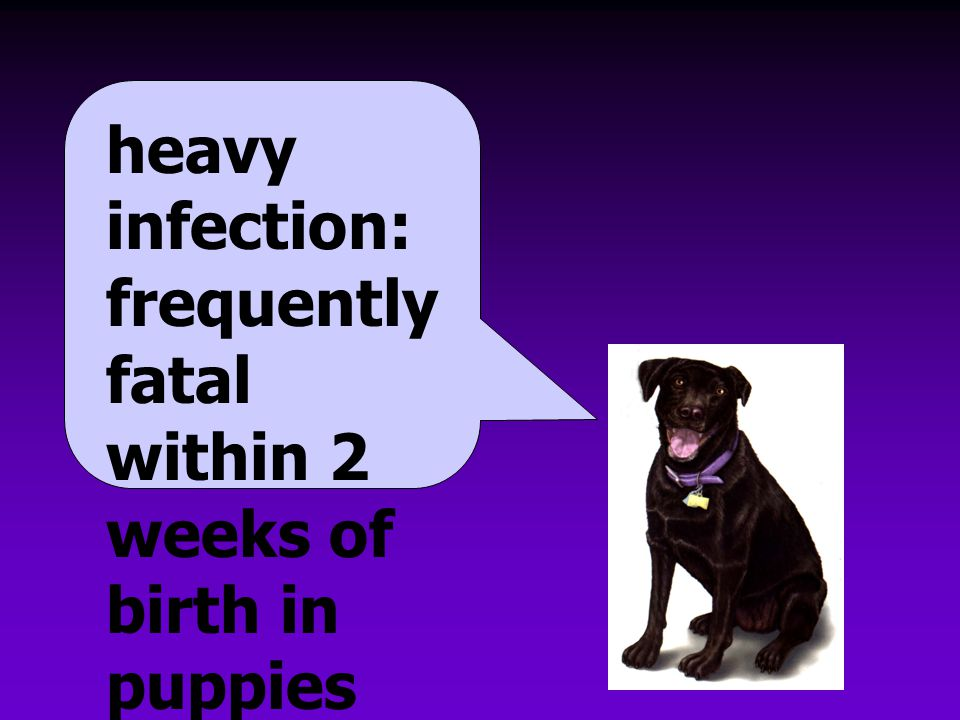 heavy infection: frequently fatal within 2 weeks of birth in puppies