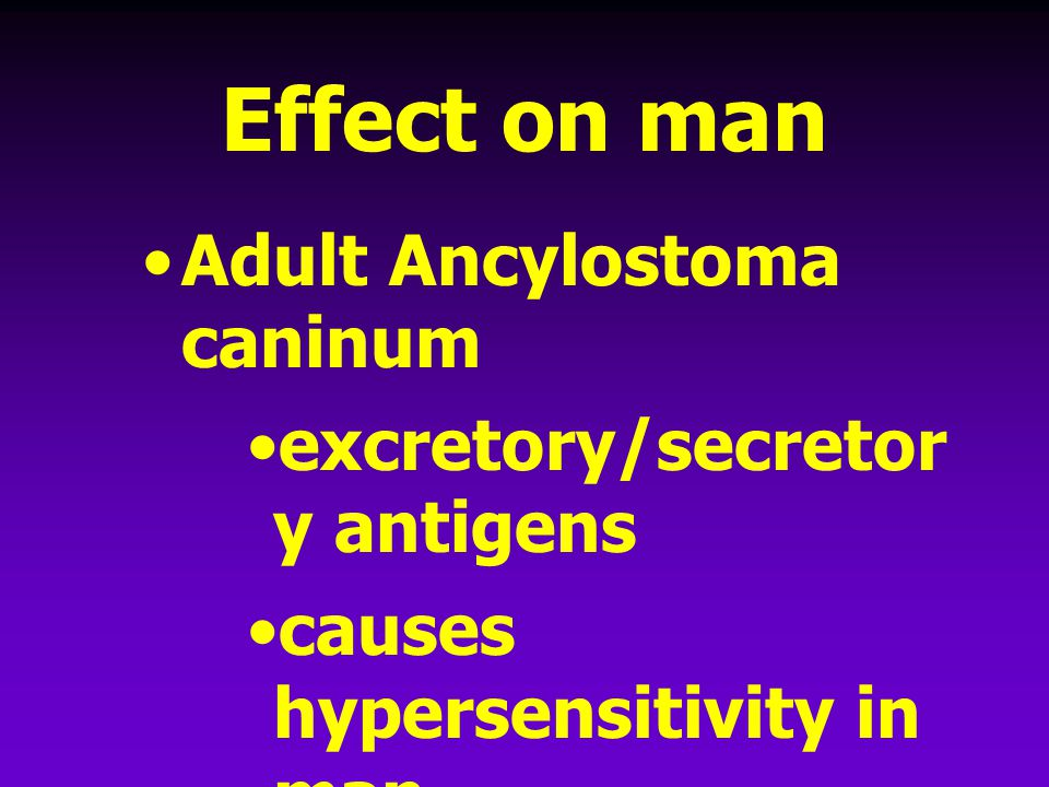 Effect on man Adult Ancylostoma caninum excretory/secretory antigens