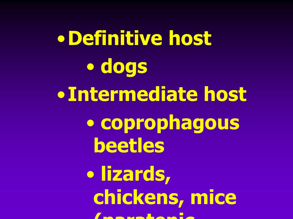 Definitive host dogs. Intermediate host. coprophagous beetles.