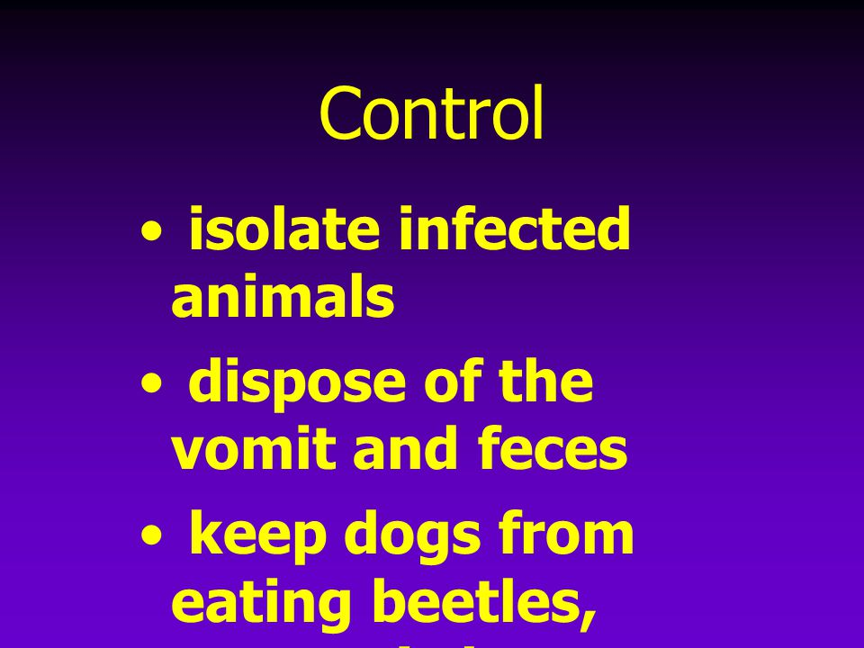 Control isolate infected animals dispose of the vomit and feces