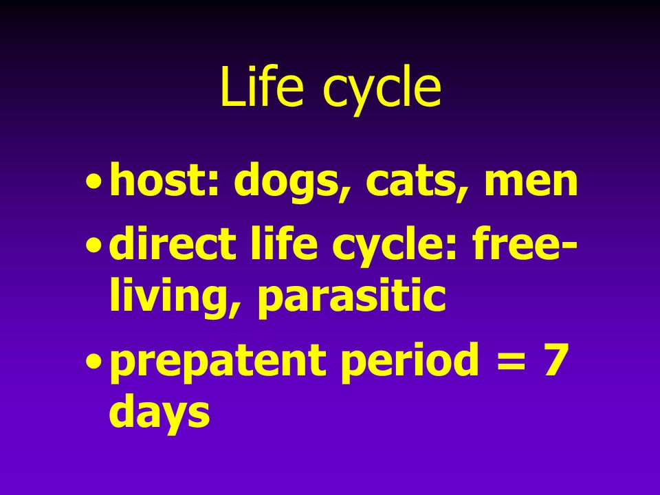 Life cycle host: dogs, cats, men