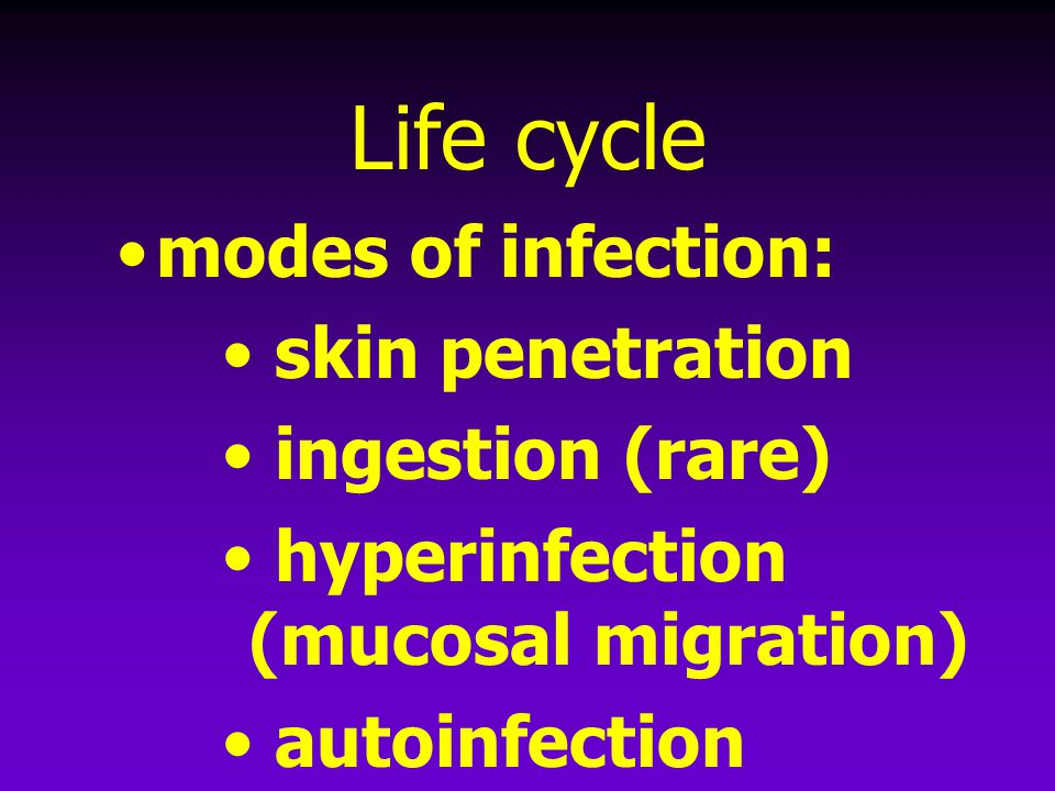 Life cycle modes of infection: skin penetration ingestion (rare)