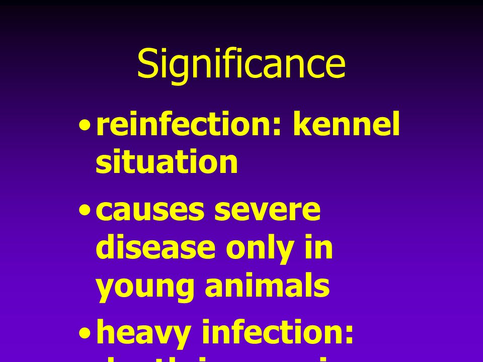 Significance reinfection: kennel situation
