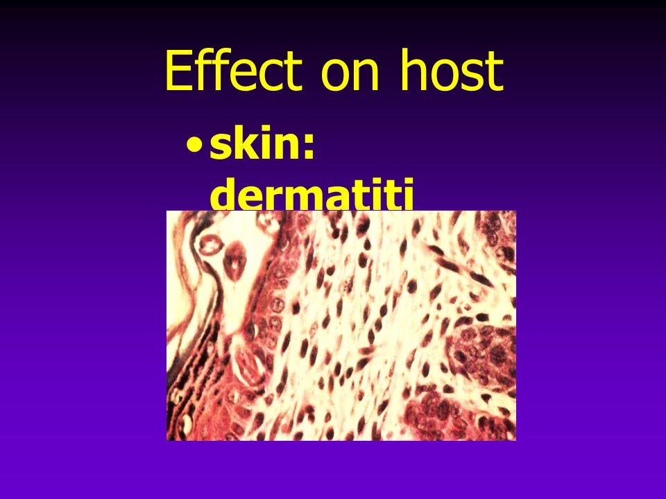 Effect on host skin: dermatitis