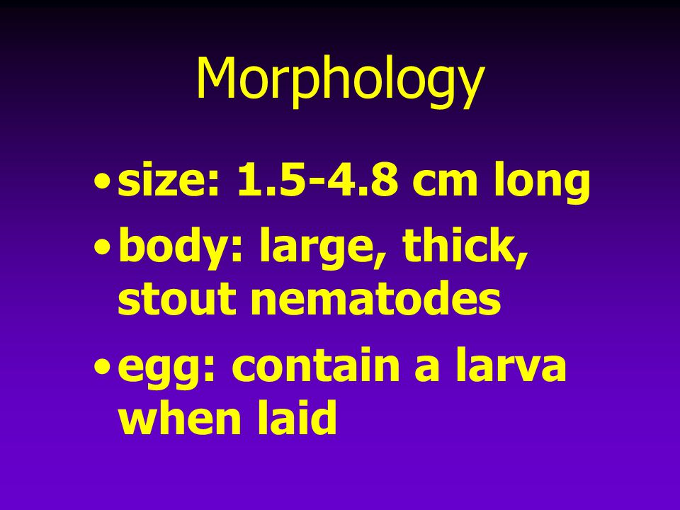 Morphology size: 1.5-4.8 cm long body: large, thick, stout nematodes