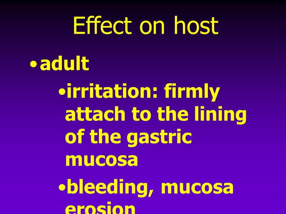 Effect on host adult. irritation: firmly attach to the lining of the gastric mucosa. bleeding, mucosa erosion.