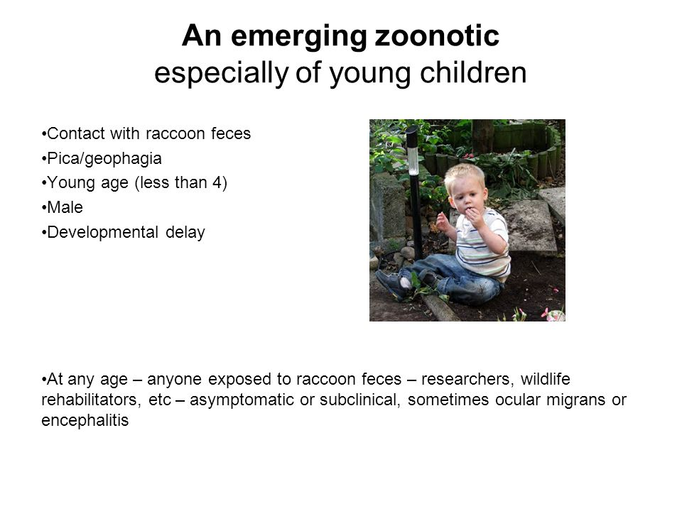 An emerging zoonotic especially of young children
