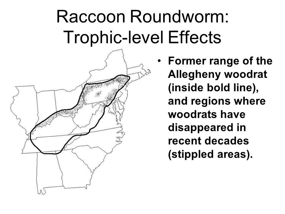 Raccoon Roundworm: Trophic-level Effects