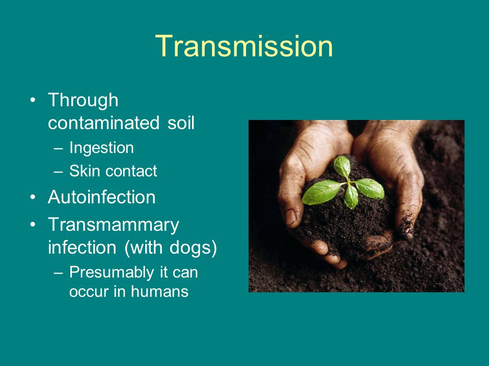 Transmission Through contaminated soil Autoinfection