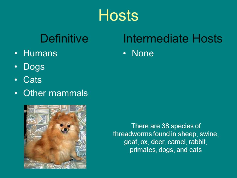 Hosts Definitive Intermediate Hosts Humans Dogs Cats Other mammals