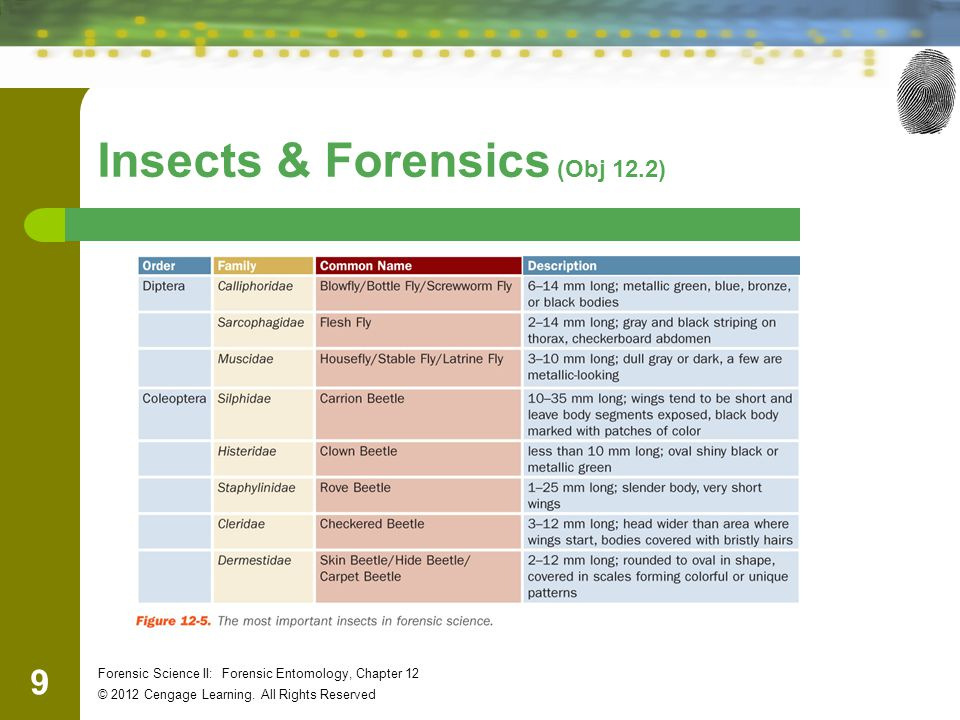 Insects & Forensics (Obj 12.2)