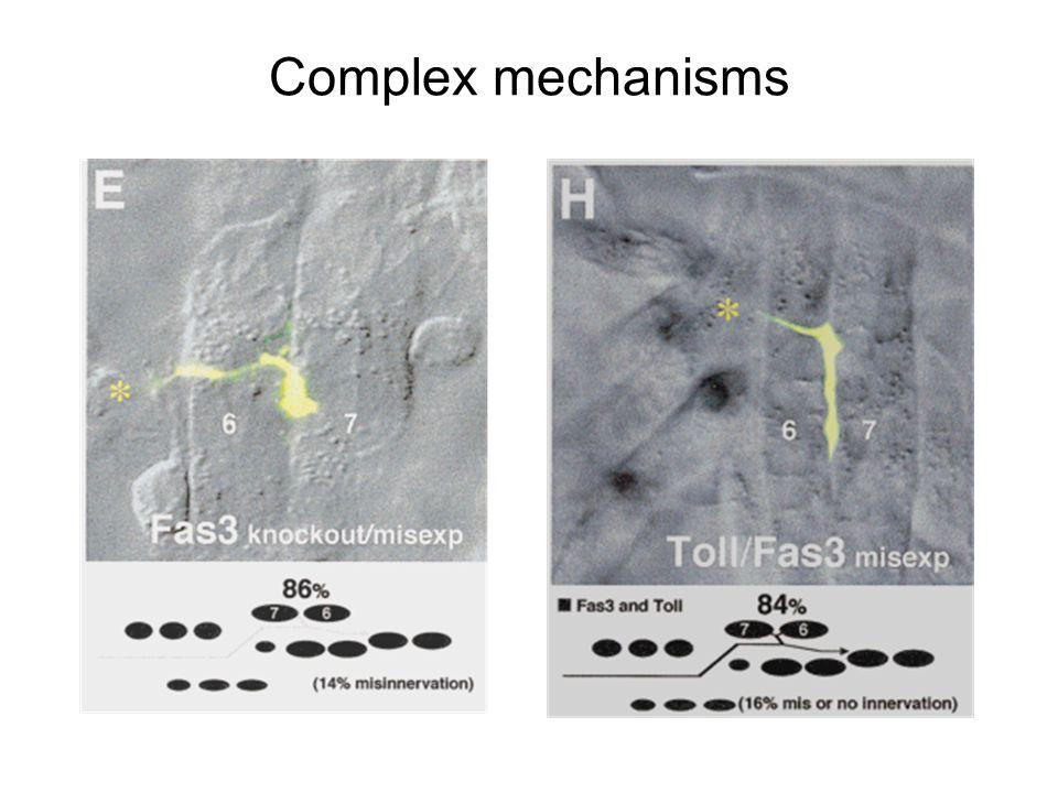 Complex mechanisms