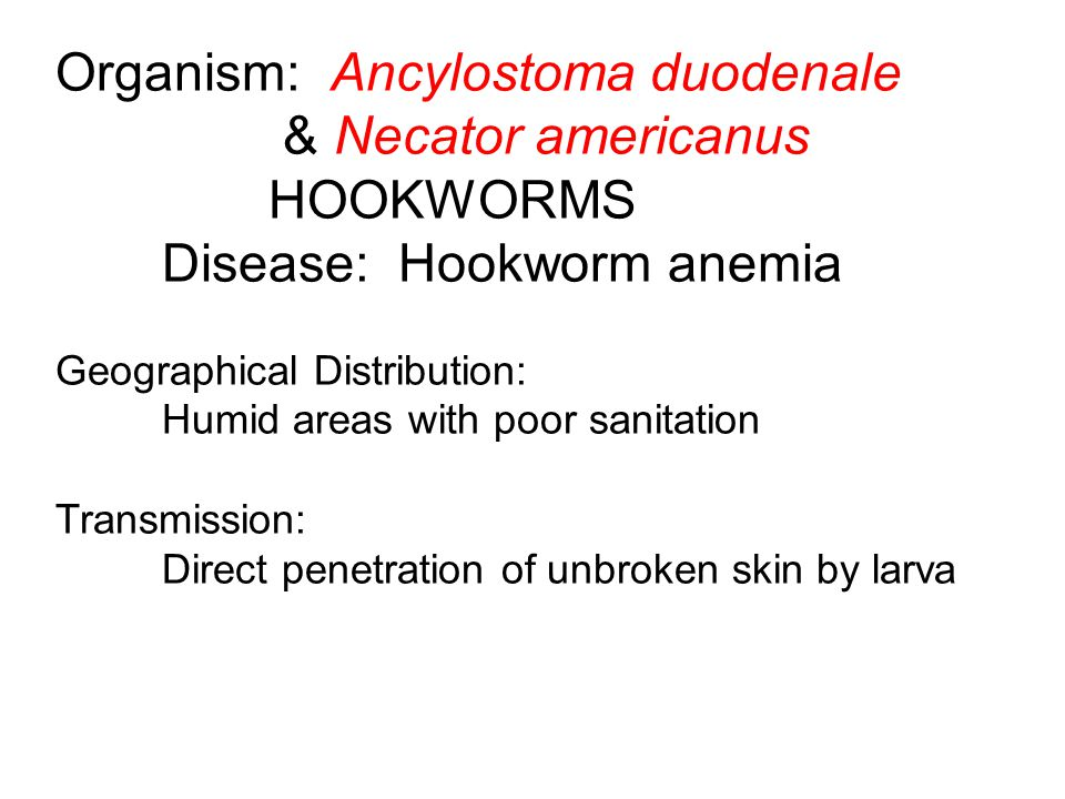 Organism: Ancylostoma duodenale & Necator americanus HOOKWORMS