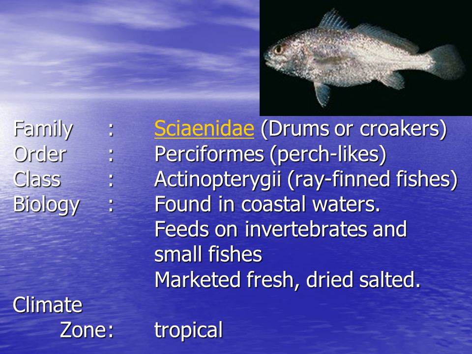 Family. :. Sciaenidae (Drums or croakers) Order. :